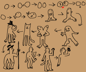 A confusing chart of human evolution