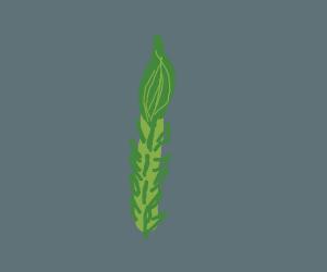 Upright Asparagus