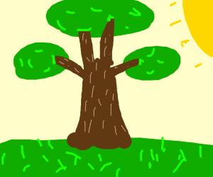 tree is photosythesizing