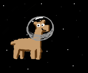Llama in space!