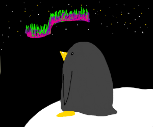Penguin looks at northern lights