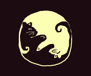 Yin Yang kitten style