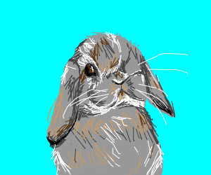 Realistic holland pop bunny