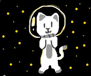 Cat in space :3