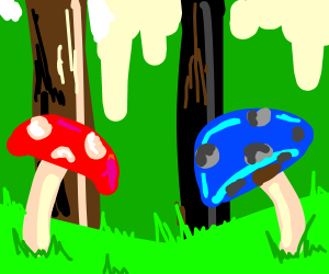 Two different coloured mushrooms