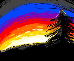 Pine tree at sunset