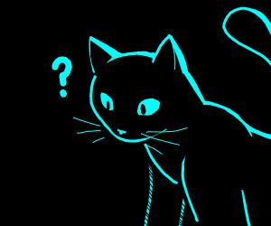 Black cat is curious