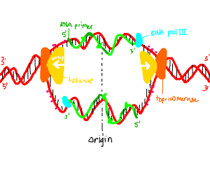 Diagram of DNA & RNA