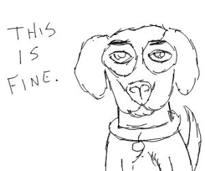 Content Doggo