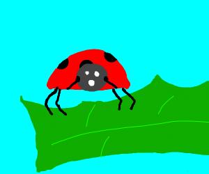 scared ladybug