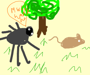 Spider stalking a mouse