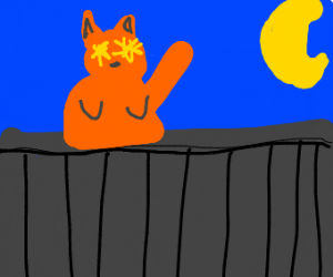 Stary eyed cat outside at night
