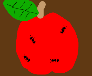 Ants on apples