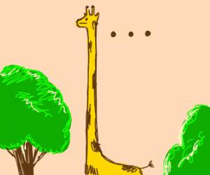 very long necked giraffe not amused