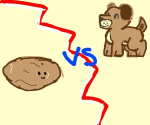 potato vs dog