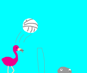 Flamingo plays volleyball with a rock