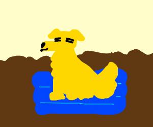 dog relaxing in chocolate milk