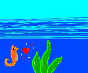 seahorse loves sea plant