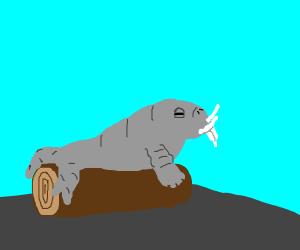 A horker on a log