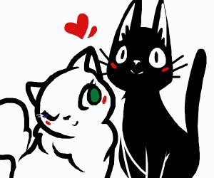 jiji finds love (the cat)
