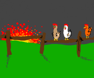 three unhappy roosters