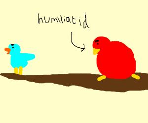 blue bird humiliates fat red bird