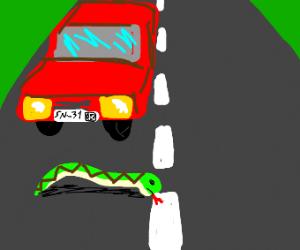 Snake dies in the road