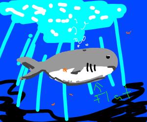 Flat Whale