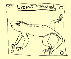 lizard anatomical chart