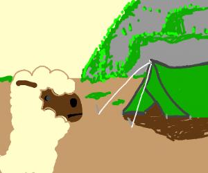 Llama and a tent
