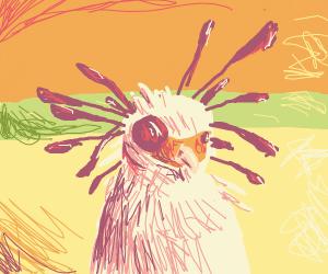 a bird with enormous eye