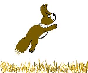 a fox-rabbit jumping