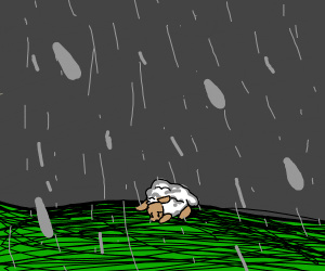 Sad Sheep in the rain