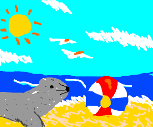 seal stares at beach ball