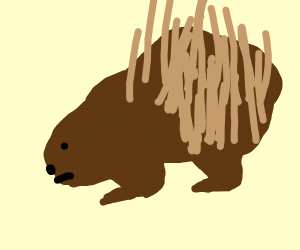 Confused Porcupine