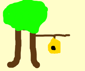 tree with a hanging beehive