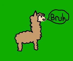 Llama Bruh.