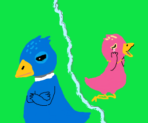 A bird couple that just had a fight