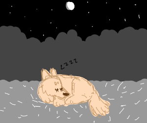 Sweet dog snoring under the stars