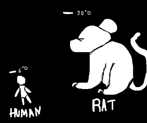 rat is MUCH bigger than humans