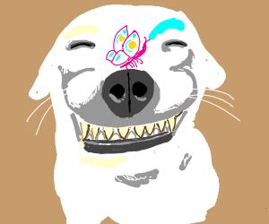 Derpy Doggo PIO