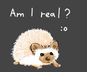 A Hedgehog's Existential Crisis