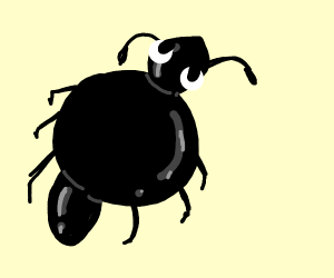 fat ant
