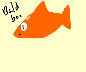 Bold Goldfish