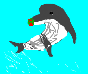 Dolphin eating a Dragonfruit