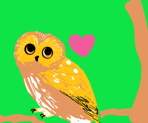 kawaii owl