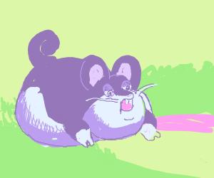 chubby rattata