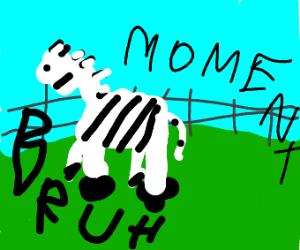 Zeebruh?