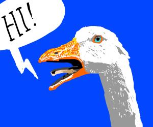 Goose says hi