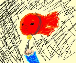 Pet Flyingfish